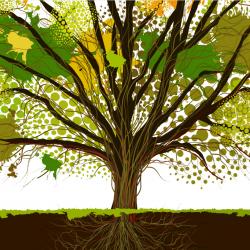 HRN - albero